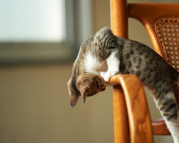 Как отучить кошку драть обои и мебель. Используем ароматы