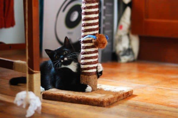 Как приучить котенка к когтеточке читайте статью