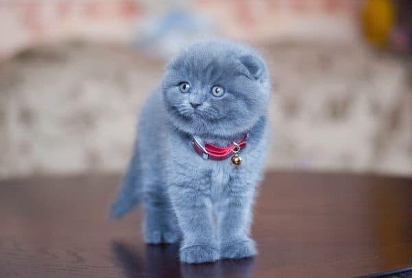 Как ухаживать за котенком в домашних условиях читайте статью