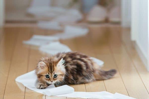 Как воспитывать котенка. Приучение к туалету