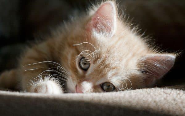 Как воспитывать котенка. Воспитание личностных качеств