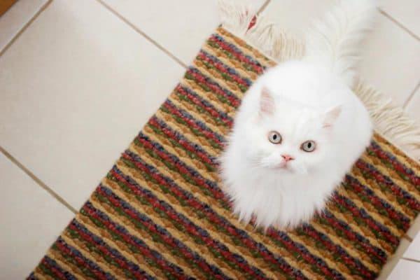 Как выводить запах кошачьей мочи читайте статью