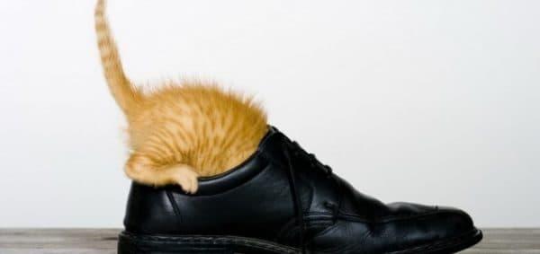Как выводить запах кошачьей мочи. Методы борьбы
