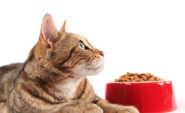 Почему кошка не ест читайте статью
