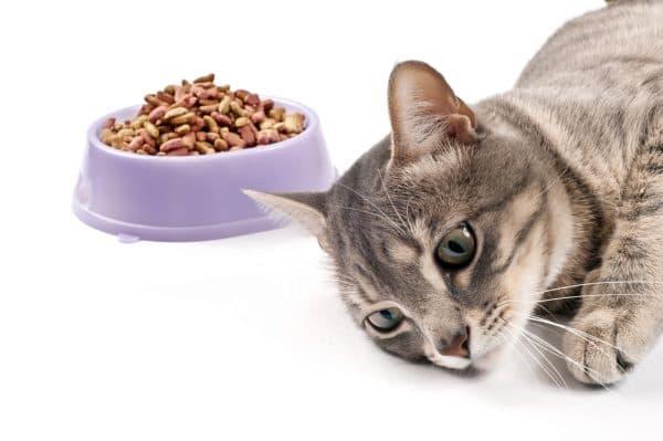 Почему кошка не ест. Стрессовые переживания