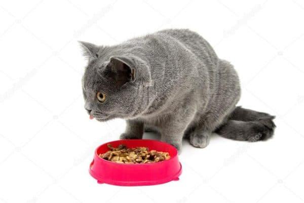 Почему кошка не ест. Заболевания внутренних органов