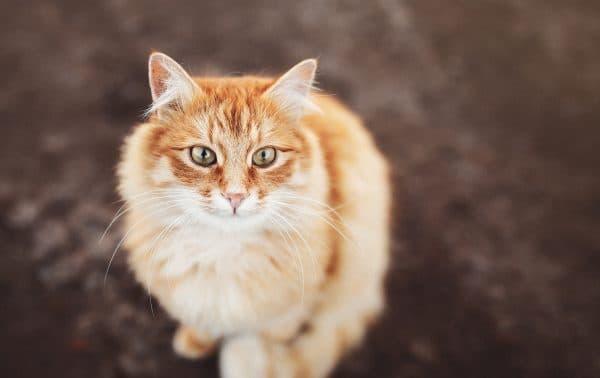 Сколько лет живут котики