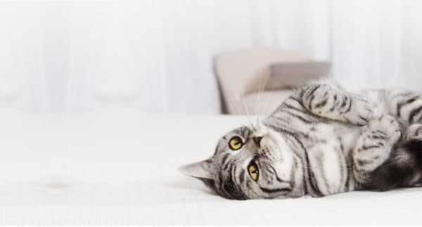 Способы предохранения от беременности для кошек