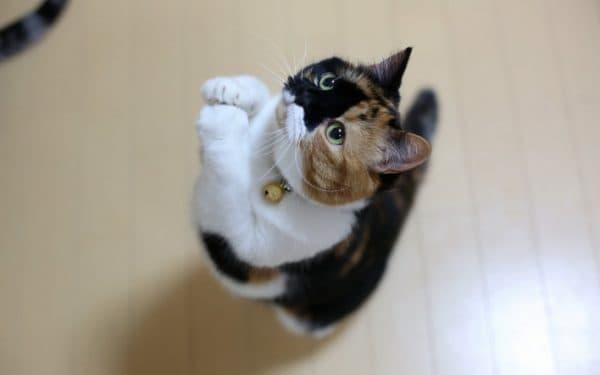 Выведение меток кота. Медикаментозные средства