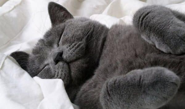 Если кошка умирает дома
