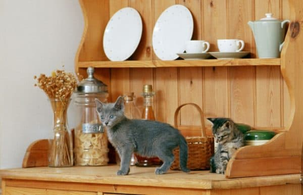 Как отучить кошку лазить по столам. Простые рекомендации для хозяев