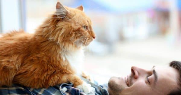 Как понять что кошка любит своего хозяина читайте статью
