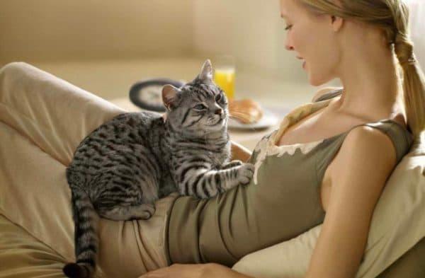 Как понять что кошка любит своего хозяина