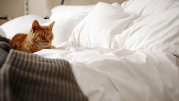 Как выявить причины и отучить кошку гадить в кровать