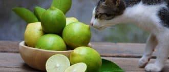 Какие запахи не любят кошки. Отпугивающие запахи