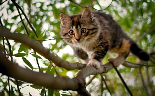 Котик на дереве