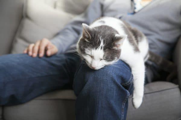 Котик спит с человеком