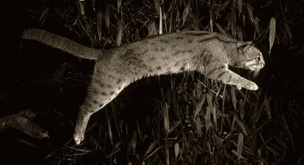 Необычная ржавая кошка