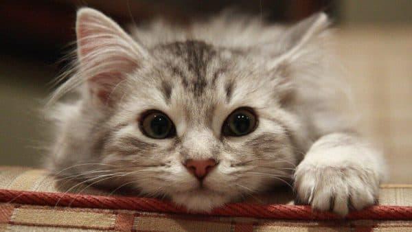 Необычные имена для кошек читайте статью