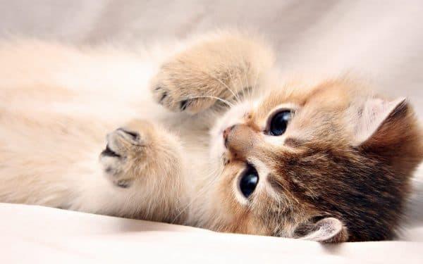 Необычные клички для представителей разных пород кошек