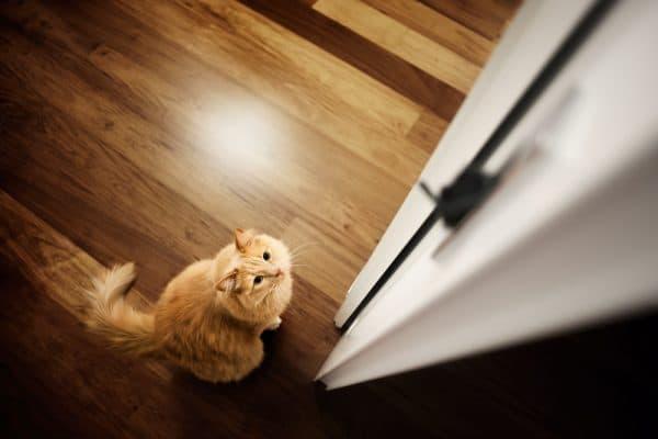 Переводчик с кошачьего языка на русский