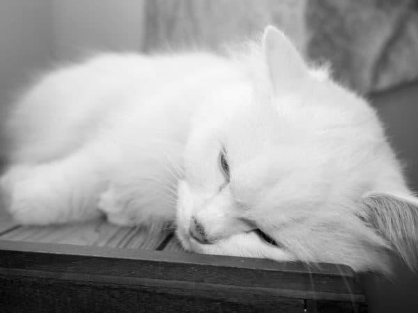 Почему и куда кошки уходят умирать перед смертью читайте статью