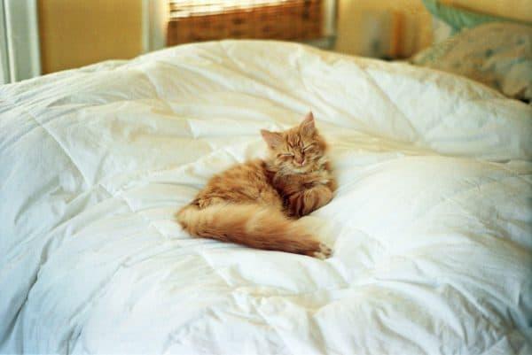 Почему кошка гадит на постель