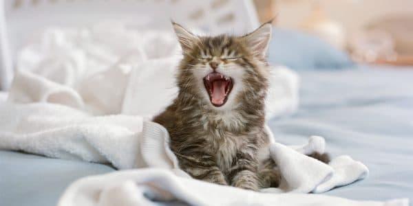 Почему кошка гадит на постель. Решение проблемы