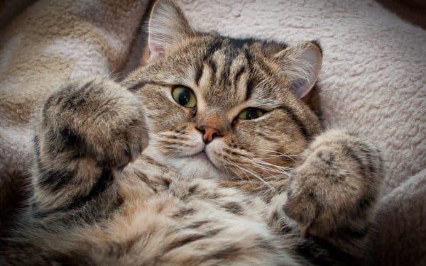 Почему кошка перестала просить кота читайте статью