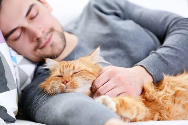 Почему кошки любят спать с хозяевами читайте статью