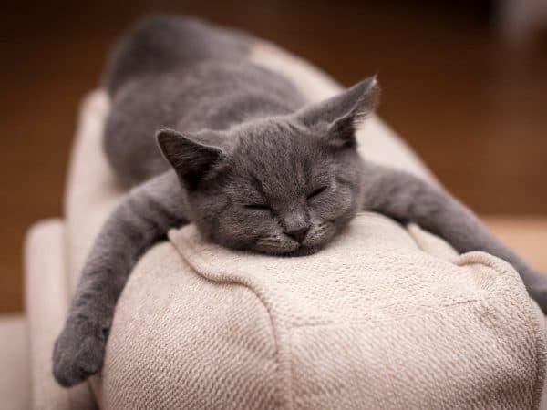 Почему кошки много спят читайте статью