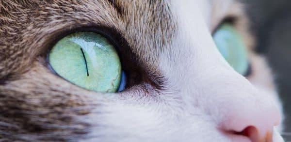 Почему у кота узкие зрачки читайте статью
