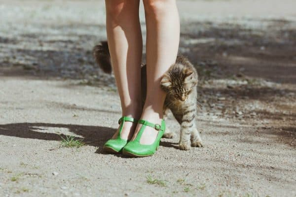 Повадки котов и кошек читайте статью