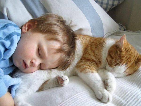 Стоит ли разрешать ребенку спать с кошкой