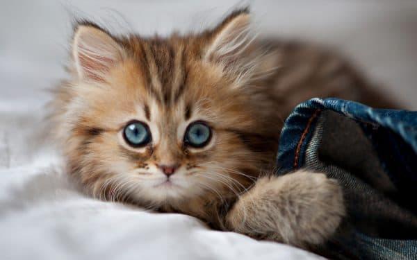 К чему снятся маленькие котята мужчине читайте статью
