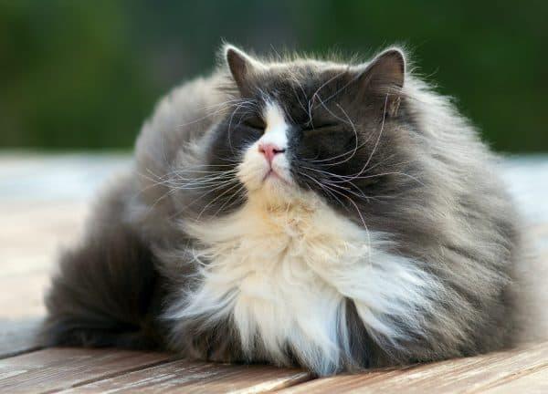 Как сделать жизнь пожилой кошки комфортной