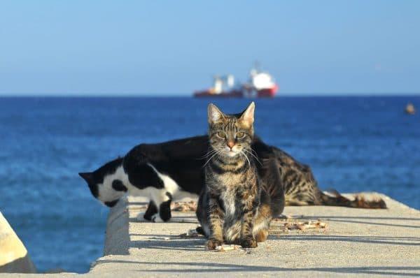 Кошка – как символ острова Кипр