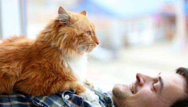 Кто в доме главный. Вы или кошка читайте статью