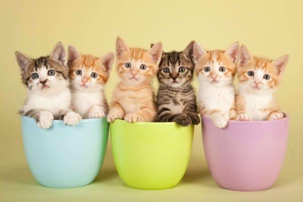 Лидеры среди самых популярных имен для кота