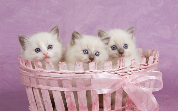 Лучшие имена для кошек в алфавитном перечне