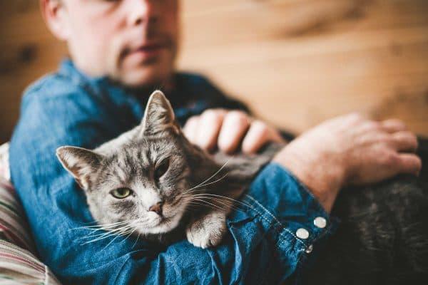 Мифы об отношениях кошки к хозяину