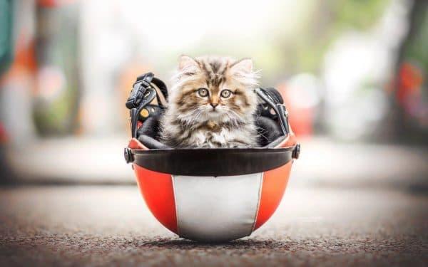 Основные ориентиры при подборе клички кошке