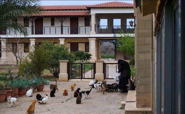 Почему на Кипре много кошек