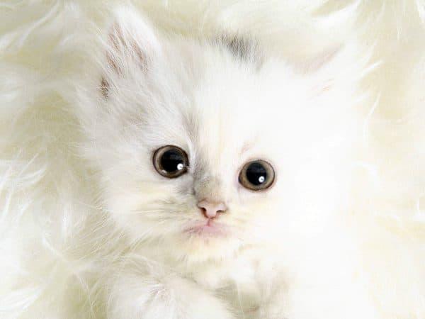 Популярные клички для котов