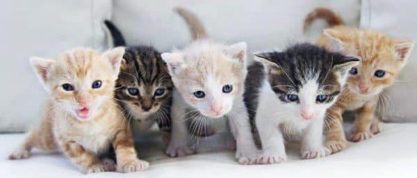 Поведение котят и взаимодействие с ними во сне