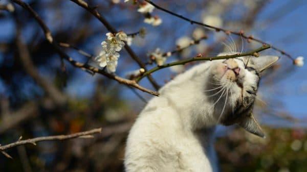 Простые японские клички для кошек