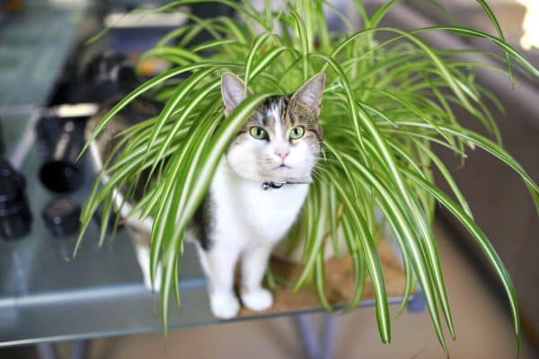 Растения которые не любят кошки читайте статью