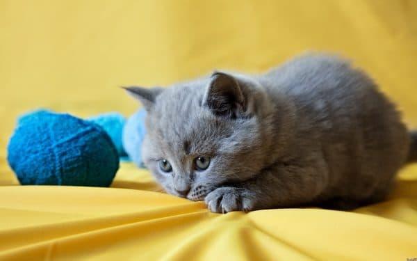Старорусские имена со смыслом для кошек