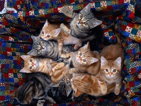 Выбор имени коту по окрасу шубки