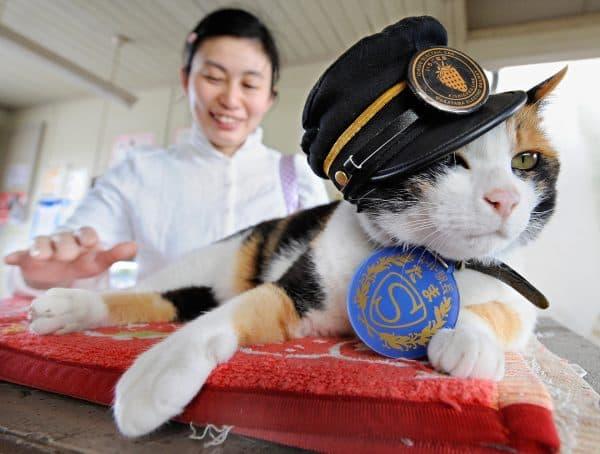 Японские имена для котов читайте статью